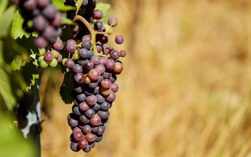 Weingebiet JGA Mallorca
